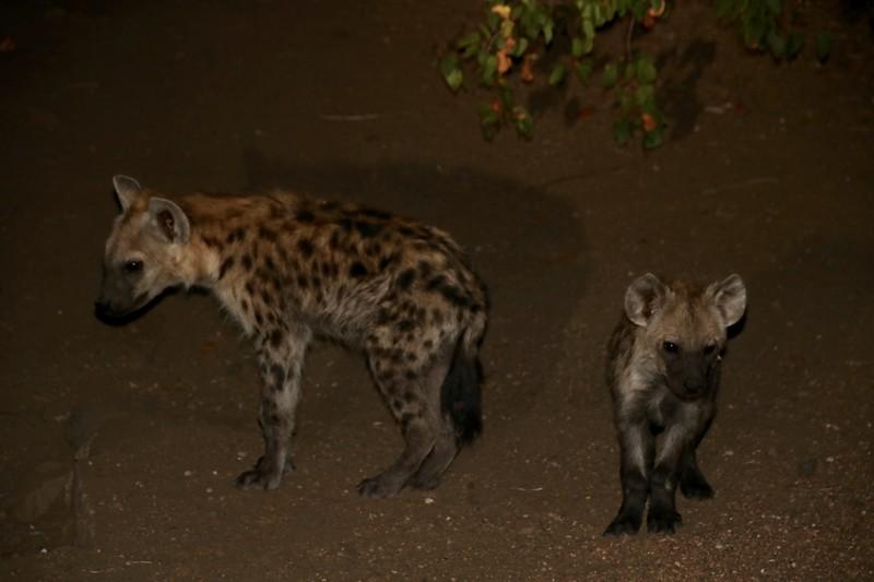 Kruger National Park Night Drive