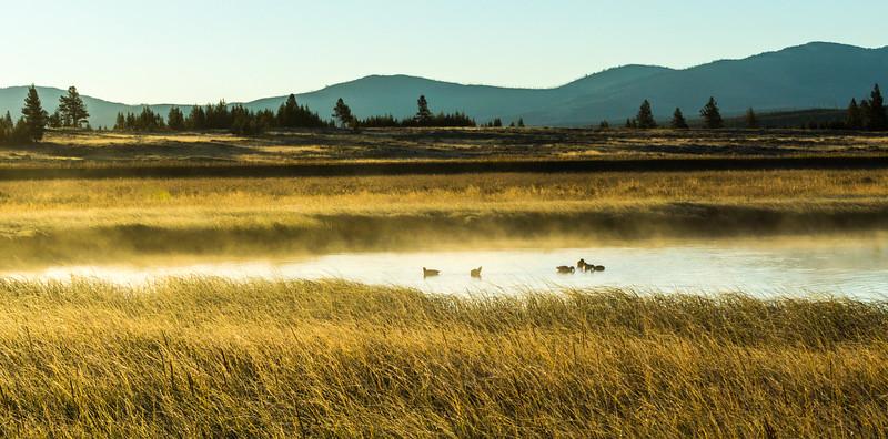 Swan-Lake-8.jpg