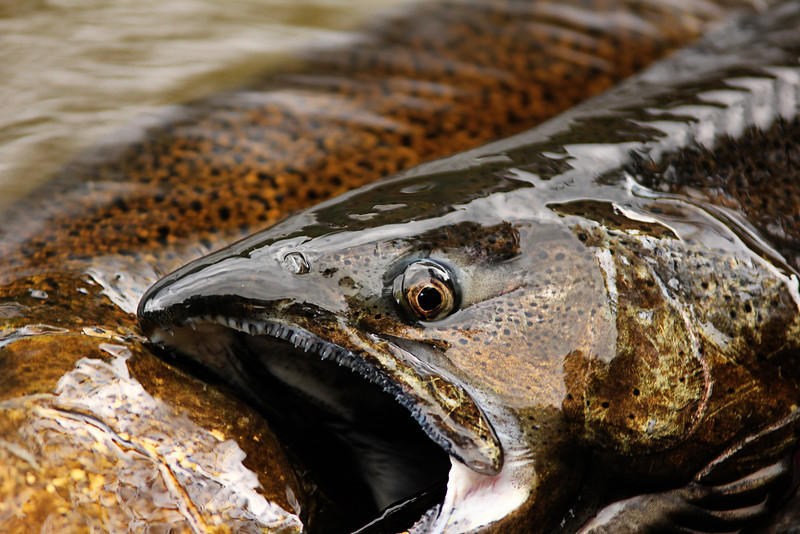 Salmon River 319.jpg