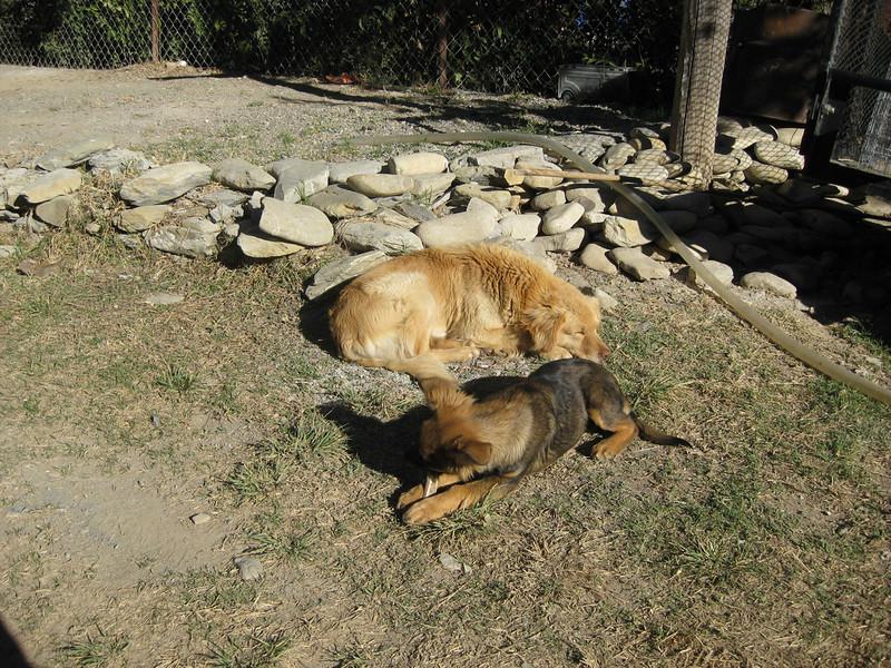 Maya the cute puppy in El Salto and Mum