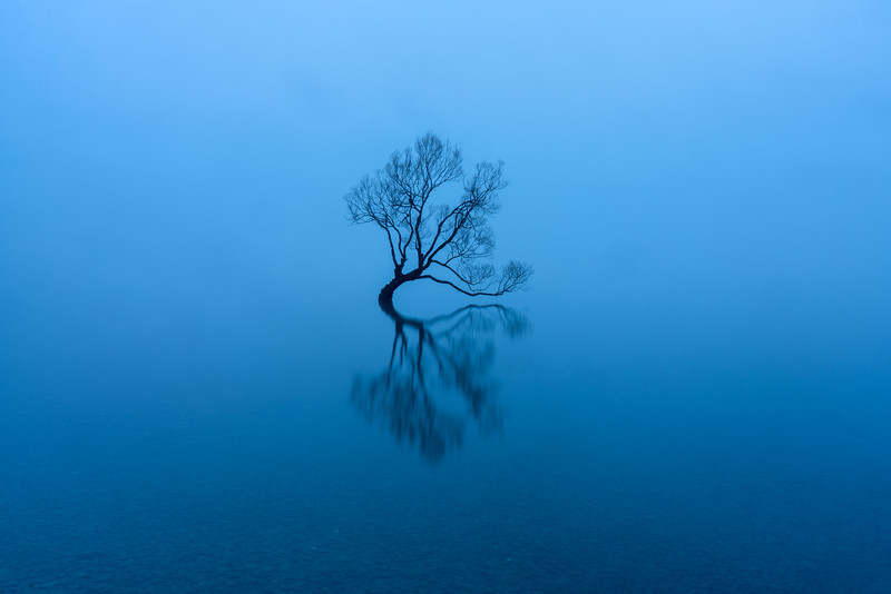Eloquent Willow, Lake Wanaka, New Zealand