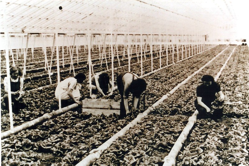 Plough Hill Nurseries 1960
