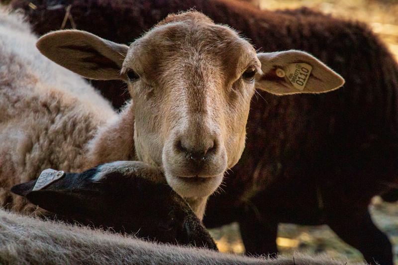 Leaping Lamb Farm-7660.jpg