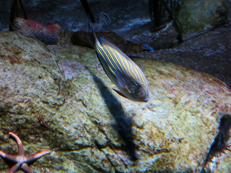 1608 striped fish.jpg