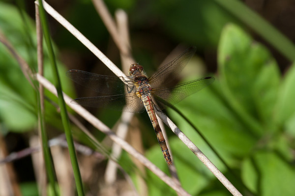 Dragonflies  and the odd bug