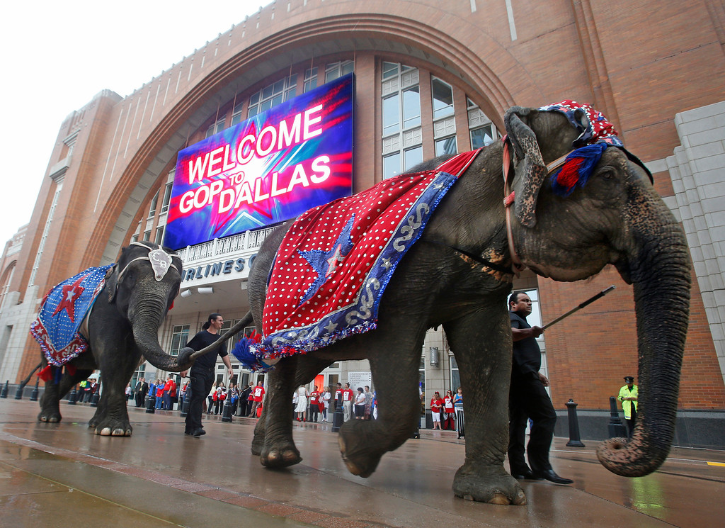 . An early morning drizzle doesn\'t dampen the the excitement of having live elephants outside the American Airlines Center, as the Republican National Committee site selection committee visits the arena, on Thursday, June 12, 2014.  (Louis DeLuca/Dallas Morning News)