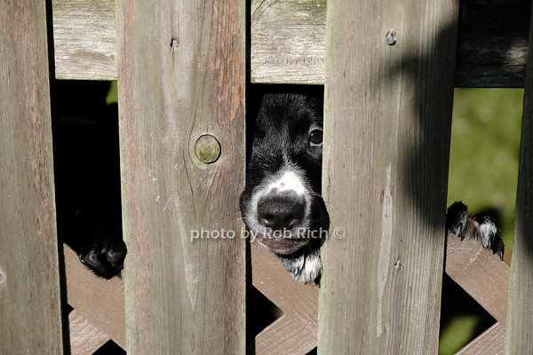 Southampton Animal Shelter 7-14-20