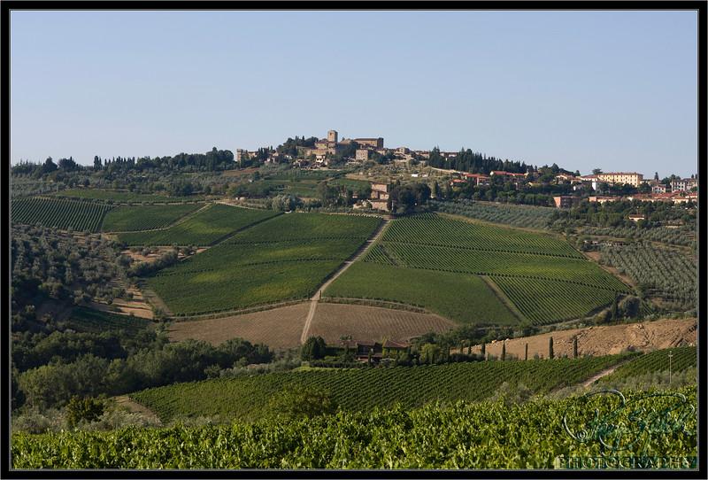 Italy Vineyards
