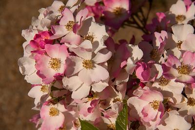 Elizabeth Gamble Garden - Palo Alto, California, USA