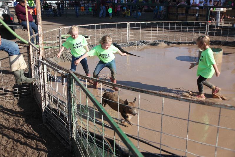 Havre Daily News / Floyd Brandt  Pig Wrestling at Blain County Fair Sunday team Piggy Patrols