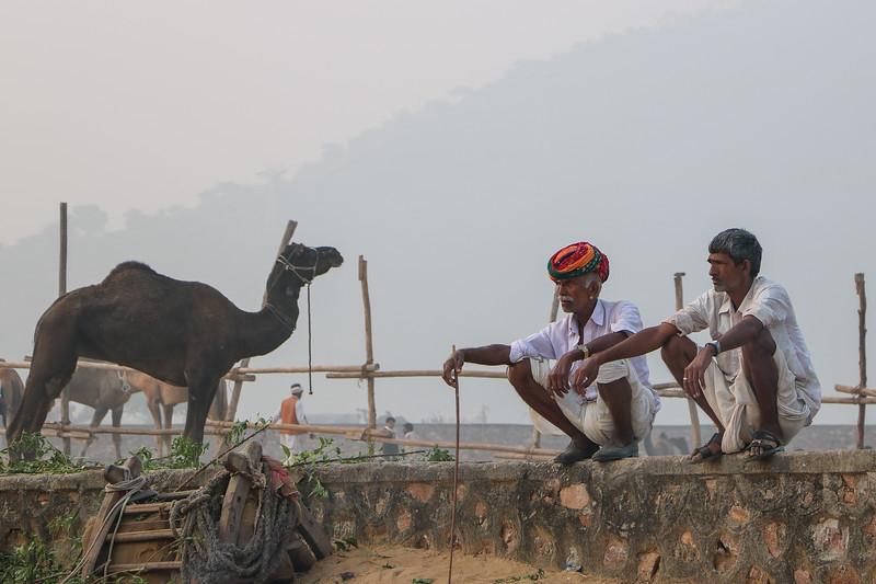 India-Pushkar-2019-8527.jpg