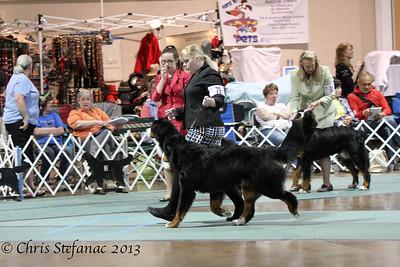 Sweeps 12-15 Puppy Dog BMDCA 2013