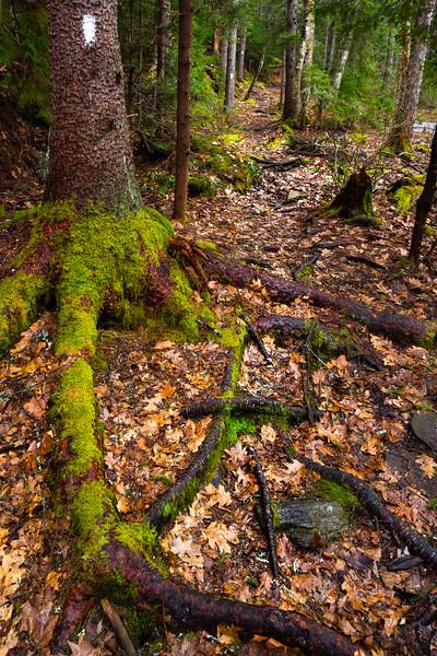 White Blaze Trail, Boothbay, Maine (31995)