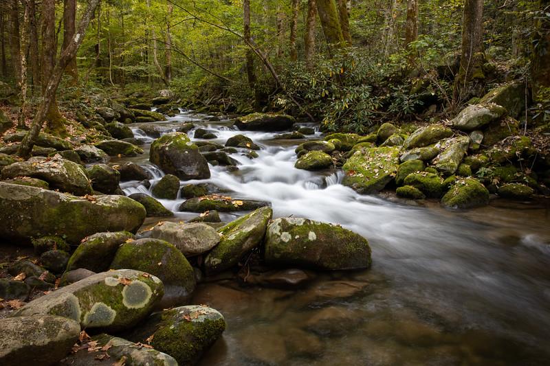 WVWS_Smoky Mountains National Park-8224.jpg