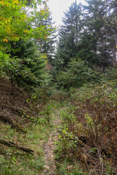 Little East Fork Trail -- 5,680'
