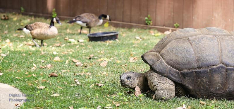 2016-07-17 Fort Wayne Zoo 976LR.jpg