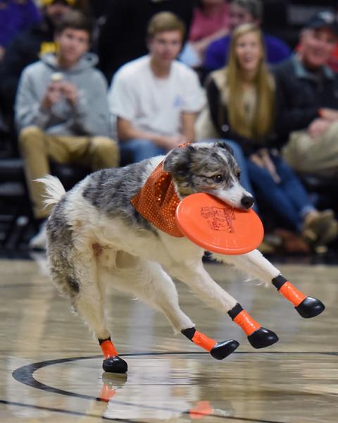 Frisbee dogs 2016-30.jpg