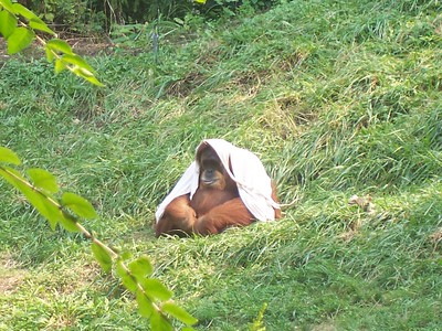 Cincinnati Zoo - 10 Sept '05