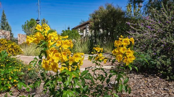 El Paso Desert Botanical Garden, El Paso TX