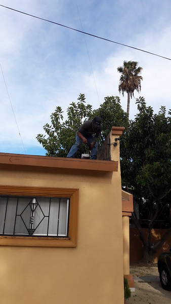 Fix XE2BNC club roof and trim the trees.