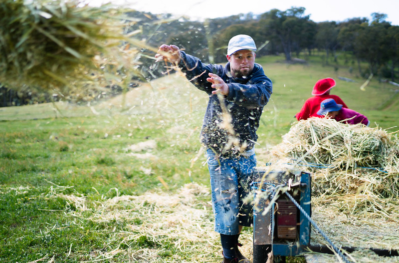 Marn tossing hay on a farm