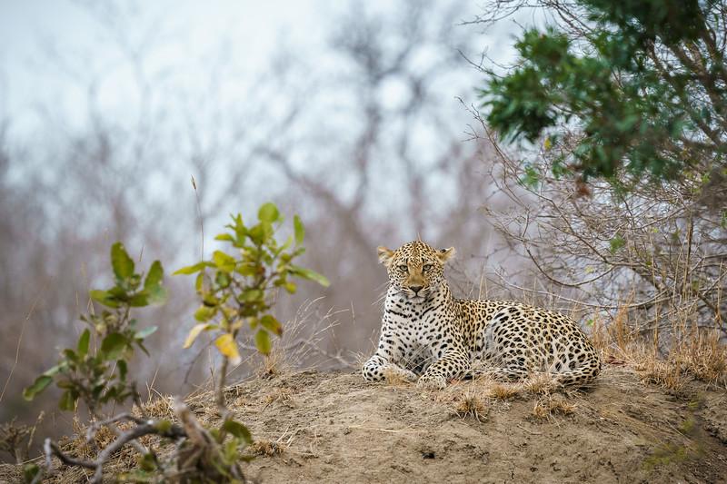 LeopardHills-20180929-0131.jpg
