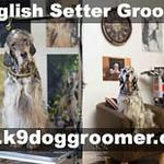 setter dog grooming.jpg