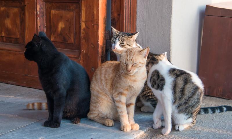 guard cats