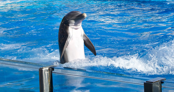 Dolphins Of SeaWorld