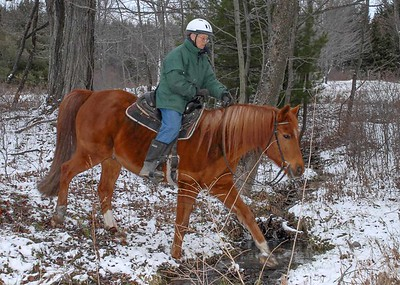 "In Praise of the ""Mere"" Trail Horse"