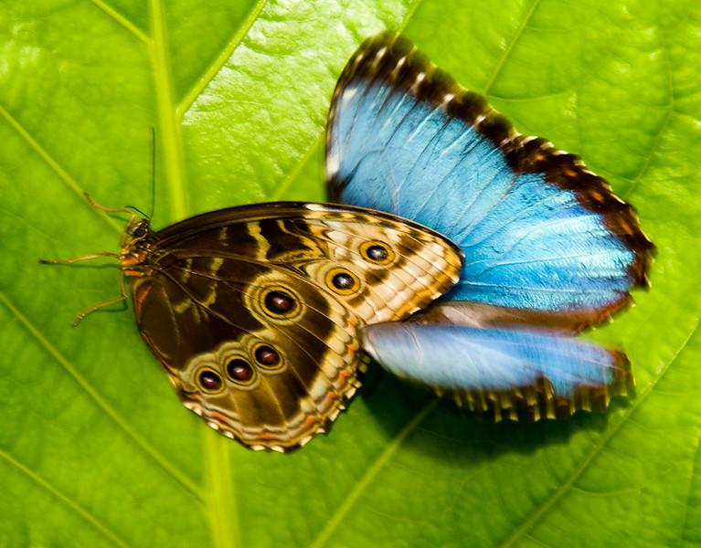 Costa Rica_Butterflies-4.jpg
