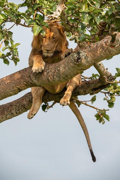 Uganda_T_QE-424.jpg