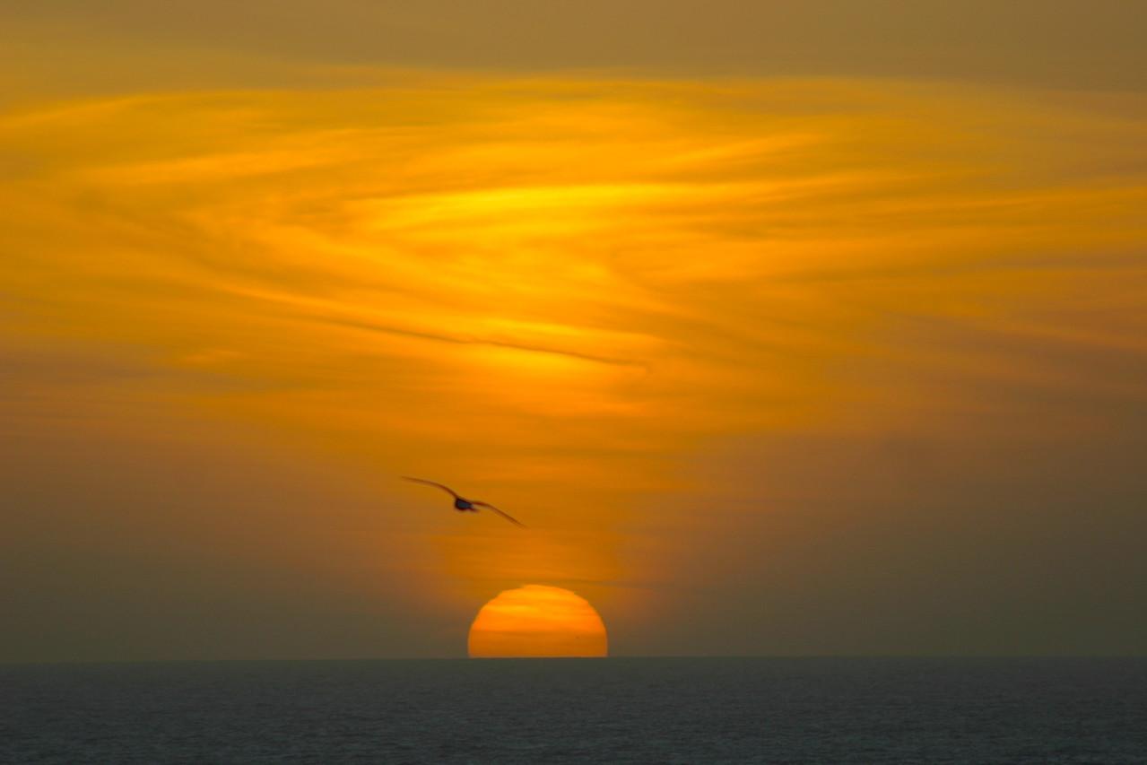 Gulls Sunset
