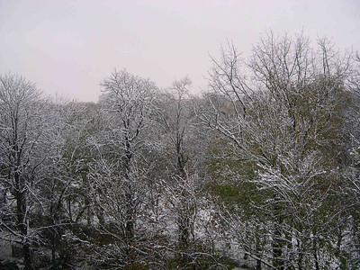 Snowy Day in Brussels Nov. 26, 2005