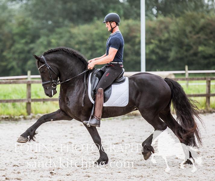 Approved_stallions_2016-5588.jpg