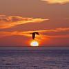Pelicans Sunset