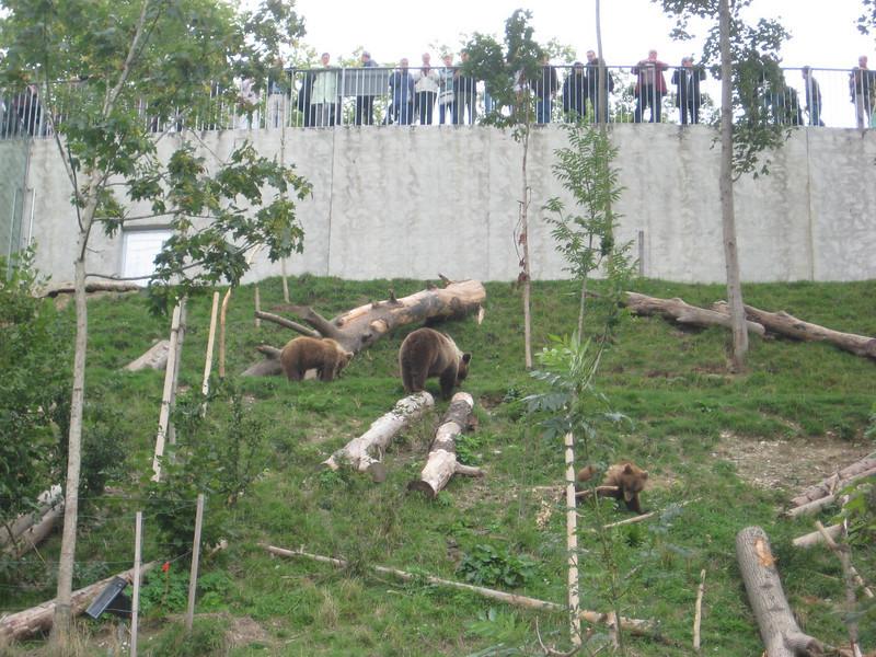 bears_02.jpg