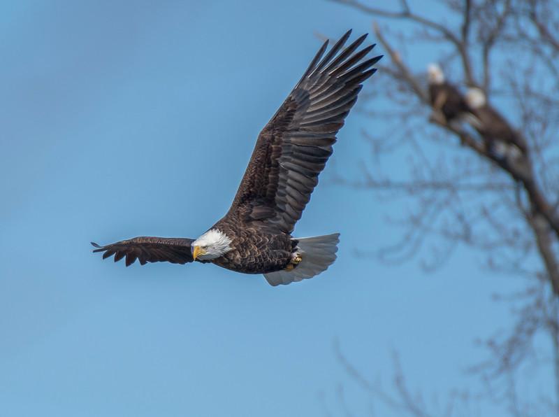 smug eagle1.jpg