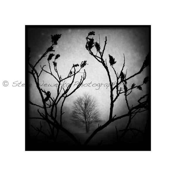 Trees #2.jpg