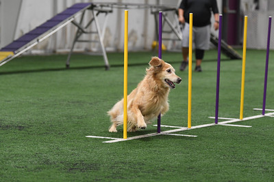 Bella Rose CPE Agility Trial August 1-2