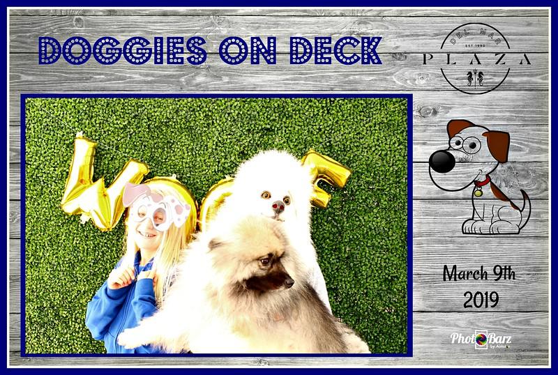 Doggys on Deck55.jpg