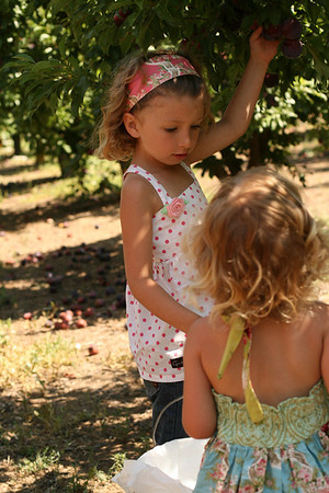 May 2009 Fruit Picking