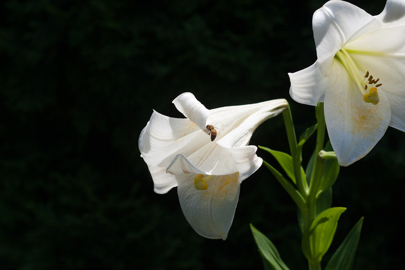 2009 06 30_NY Botanical Gardens_0747.jpg