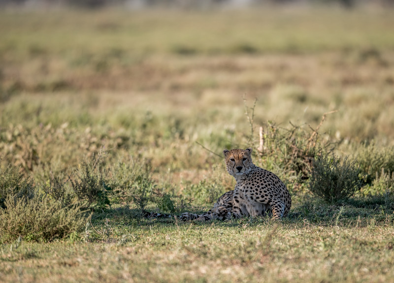 Tanzania_Feb_2018-263.jpg