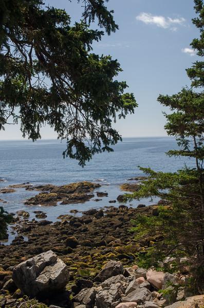 Acadia Nat'l Park-Terry's - July 2017-519.jpg