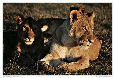 The Best of Masai Mara