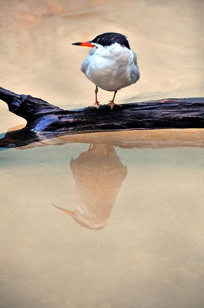 Bird with Reflection.jpg
