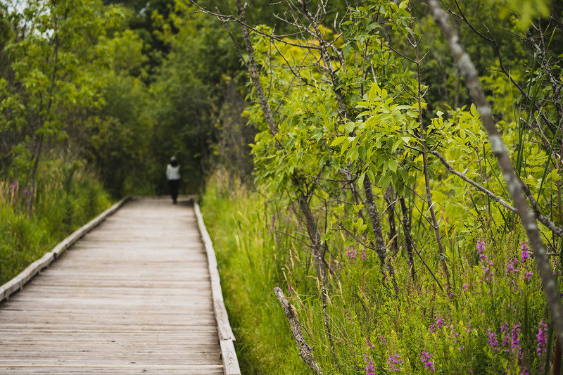 boardwalk through a wetland with a woman in the distance