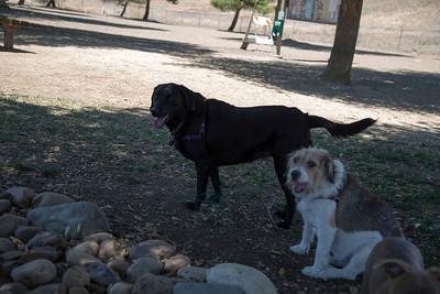 Benicia Dog Park
