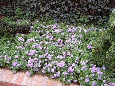 Duke English Garden